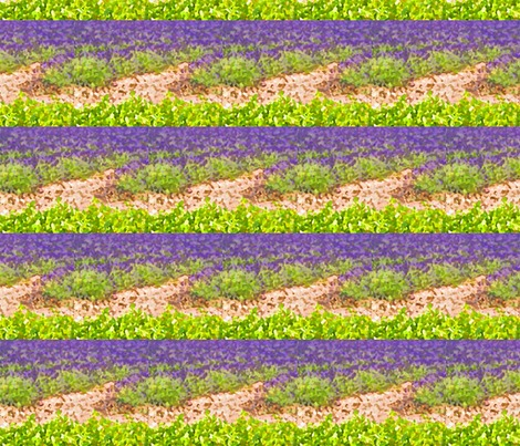 Rrlavender_fields_ed_contest80853preview