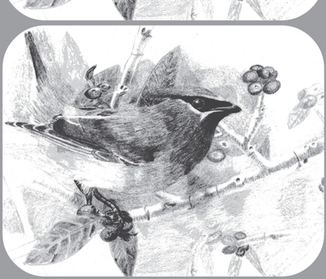 Rrrrrrrrmy_drawing_of_a_cedar_waxwing-_slightly_enhanced_because_the_scan_faded_the_true_colors_2__ed_ed_ed_ed_contest81703preview