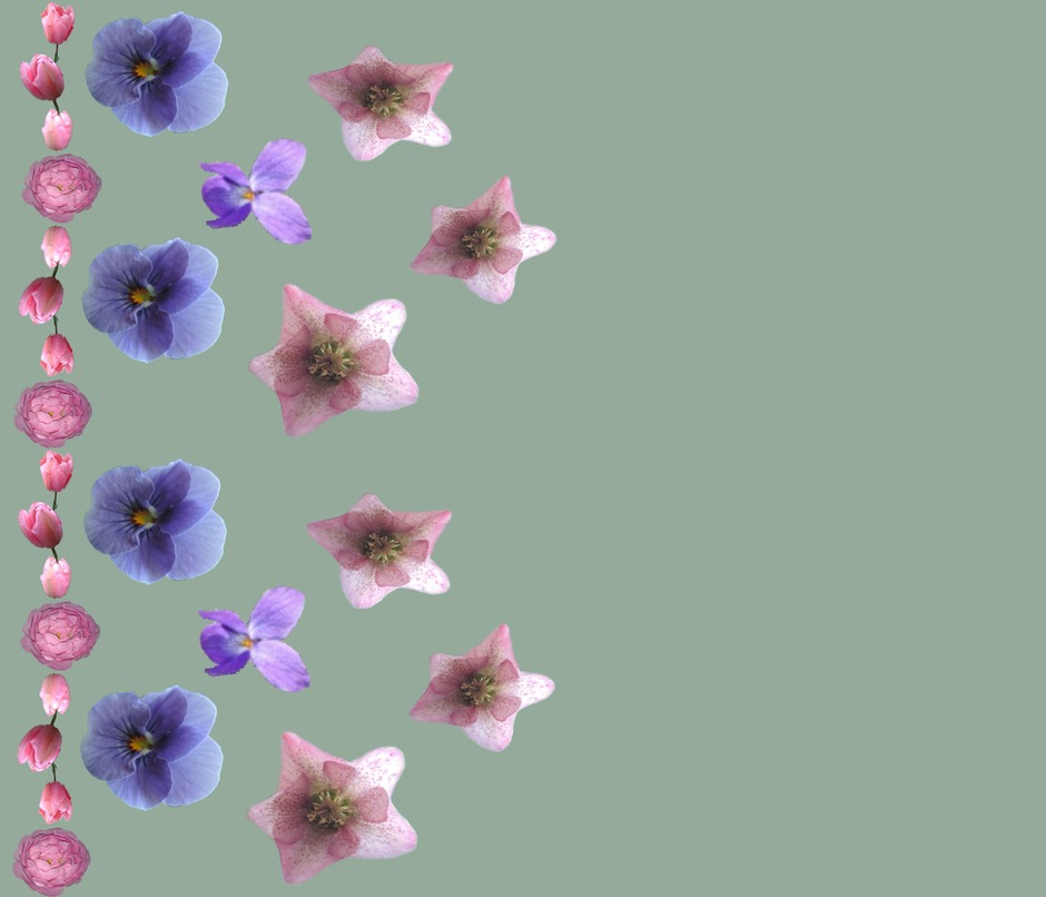 Rrhelioborus__tulip__rose_and_pansy_border_a_contest98746zoom