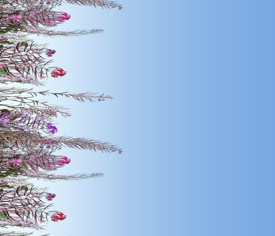 Rpink_floral_border2_copy_contest98968zoom